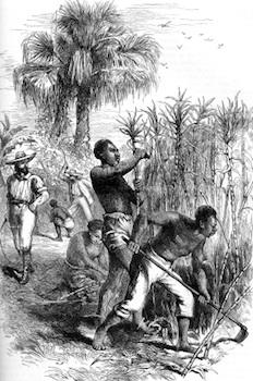 Caribbean History Slavery