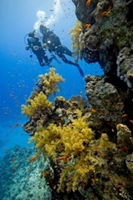 St Croix Scuba Diving