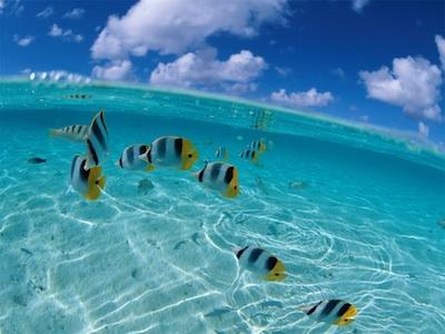 St Croix Activities, Buck Island Snorkeling