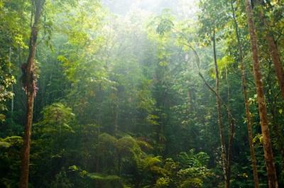 St Croix Caribbean Rainforest